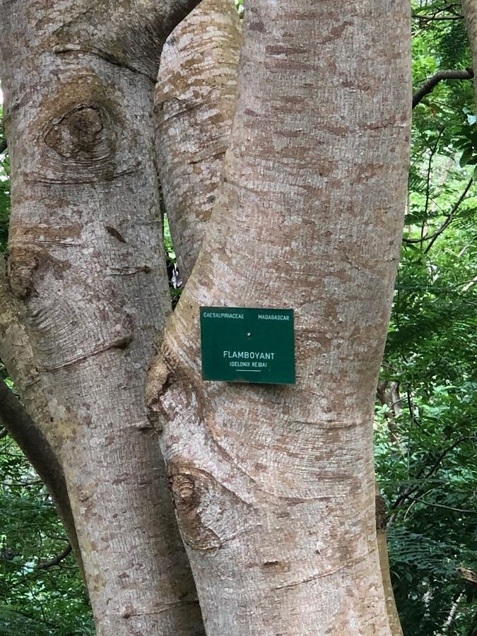 Jardin botanique Bingerville - Flamboyant